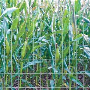 Garden Zone 48 In X 50 Ft 14 Gauge 2 In X 4 In Mesh