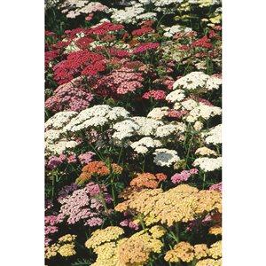 9-cm Assorted Perennial
