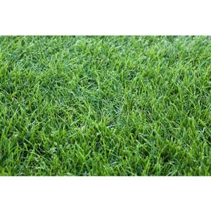 Turf Grass Sod - 710 + sq ft