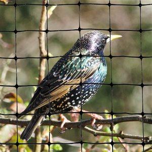 Bird-X Standard Bird Net - 200-ft x 14-ft