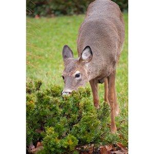 Bird-X Deer Guard Ultrasonic Deer Repeller