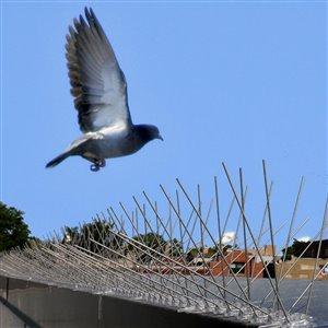 Bird-X Extra Wide Stainless Steel Bird Spikes - 100-ft Kit