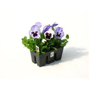 Plants, Bulbs & Seeds