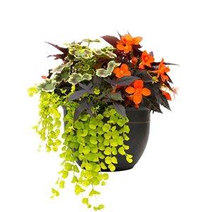 "14"" Garden Treasures Premium Planter"