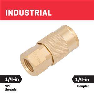 Kobalt Brass Coupler Female 1/4-In Industrial