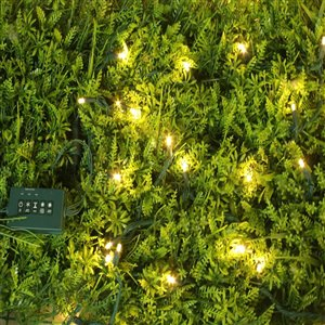 50-Count Warm White LED Mini Light String