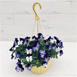 """10"""" Spring Hanging Basket Cool Wave Violet Pansy"""