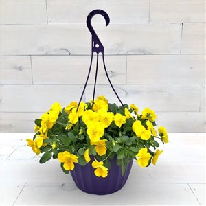 Garden Treasures 10-in Spring Hanging Basket Cool Wave Yellow Pansy