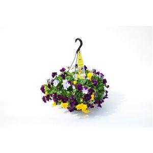 """10"""" Spring Hanging Basket Mix Variety"""