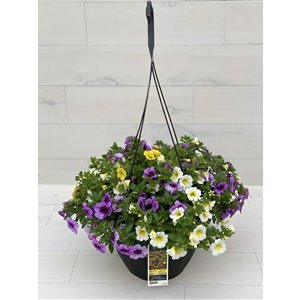 "12"" Hanging Basket Calibrachoa"